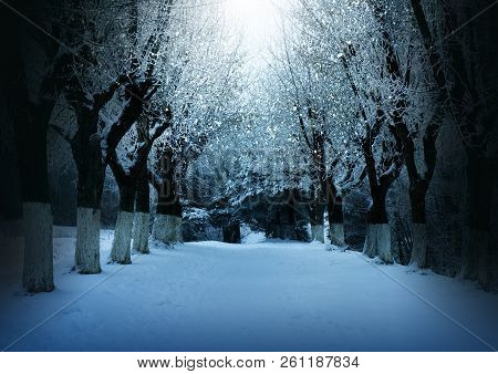 Winter Nature, Snowy Night Magic Forest Landscape