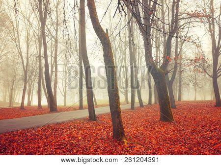 Fall November foggy landscape. Deserted fall park alley with bare trees and dry fallen orange fall leaves, mysterious fall scene, colorful fall scene in fall foggy weather. Fall landscape in vivd tones