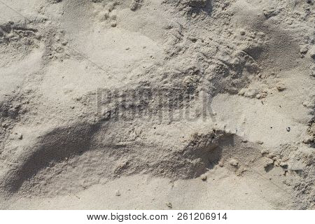 White Sand Beach Texture. Sea Coast Top View Photo. Natural Grit Texture. Dry Sand Surface With Step