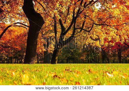 Autumn picturesque landscape. Autumn trees with yellowed foliage in sunny October park. Colorful autumn landscape in vivid tones, autumn park landscape