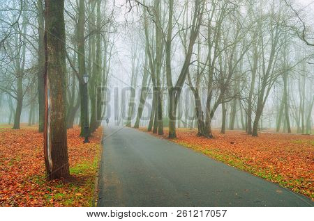 Fall landscape. Foggy fall park alley with bare fall trees and dry orange fallen leaves, colorful fall alley in foggy fall weather. Fall landscape scene
