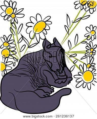 Tranquil Dog.  Illustration Of Sitting Tranquil Dog Between Of Daisies.