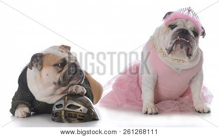 bulldogs dressed as a knight and a princess on white background