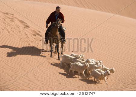 Navajo Indian Herding His Flock Of Sheep