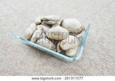 Close Up Of Live Quahogs Or Hard-shell Clams
