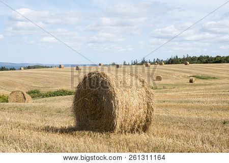 Bales Of Hay In The Field In Western Part Of Prince Edward Island Canada