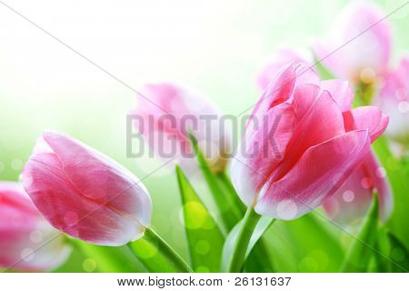 flower with  bokeh summer background poster
