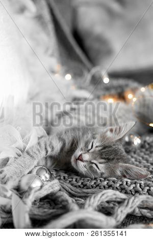 A Cute Gray Kitten Lies On A Gray Plaid In A Christmas Decoration.  Christmas Home Decor