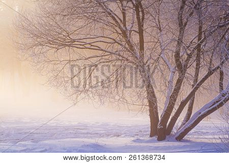 Winter Scene. Frosty Winter Landscape. Frost And Snow At Winter Morning. Christmas Background. Natur