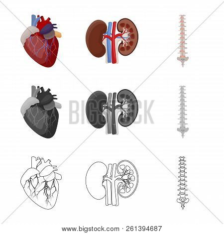 Vector Design Of Body And Human Icon. Collection Of Body And Medical Stock Vector Illustration.