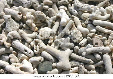 Weathered and bleached coral beach close up. Daydream Island Queensland Australia. poster