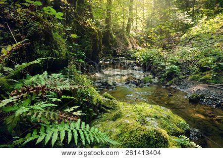 Stream In Rainforest. Stream In Rainforest Nature. Rainforest Stream. Nature. Stream. Natural Enviro