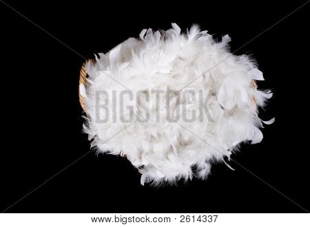 Basket Of Feathers