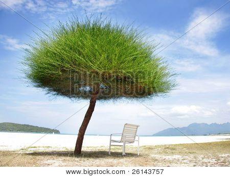 green grass umbrella and chair on beach