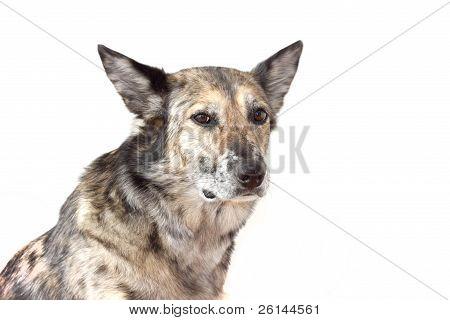 Mixed-breed dog