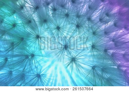 Abstract Turquoise Background, Dandylion Flower Close Up