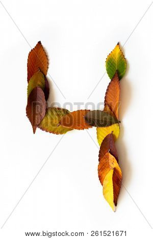 Number 4 of colorful autumn leaves. Cardinal number four mades of fall foliage. Autumnal design font concept. Seasonal decorative beautiful type mades from multi-colored leaves.