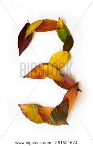 Number 3 of colorful autumn leaves. Cardinal number three mades of fall foliage. Autumnal design font concept. Seasonal decorative beautiful type mades from multi-colored leaves.