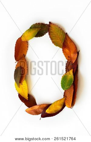 Number 0 of colorful autumn leaves. Number zero mades of fall foliage. Autumnal design font concept. Seasonal decorative beautiful type mades from multi-colored leaves. Natural autumnal alphabet.