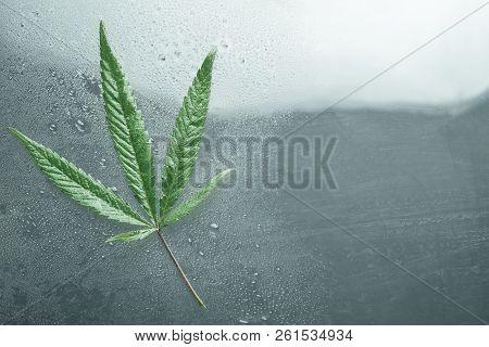 Cannabis Leaf, Cannabis, Legal And Black Market On Wet Glass
