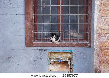 cat at the grating window