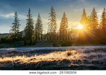 Sun Light Through Tall Spruce Trees On The Hill. Back Lit Meadow With Frozen Grass. Gorgeous Autumn