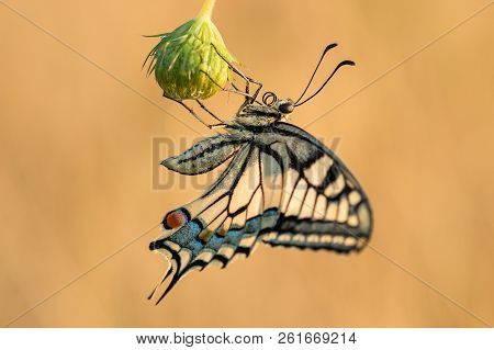 Beautiful Nature Scene With Butterfly. Macro Shot Of Butterfly On The Flower. Butterfly In The Natur