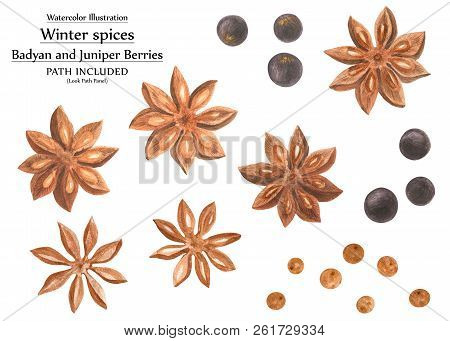 Botanical And Decorative Art. Winter Spices, Badyan And Juniper. Set For Christmas Design, Path Incl