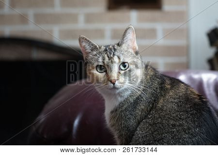Chat The Cat With Big Eyes Sitting