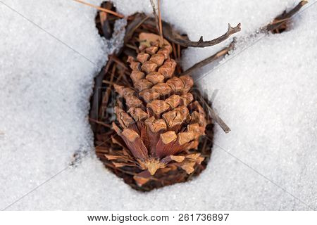 Close Up Photo Of Pine Cone And Twigs On A Snow Covered Forest Ground, In South Lake Tahoe, Californ