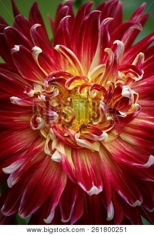 Closeup Of A Beautiful Dahlia Flower - Warm Autumn Color Space