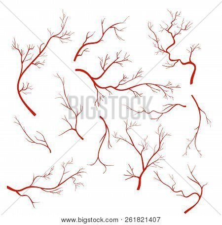 Vector Illustrations Set Of Veins And Vessel, Red Capillaries, Blood Arteries Isolated On White Back