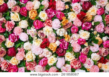 Spring And Summer Concept - Close Up Of Flowers Wall Background With Beautiful Colorful Roses And Pe