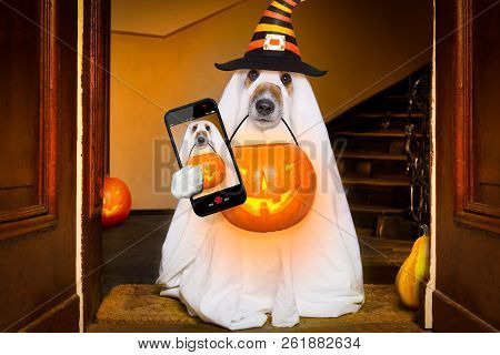 Dog Sitting As A Ghost For Halloween In Front Of The Door  At Home Entrance With Pumpkin Lantern Or