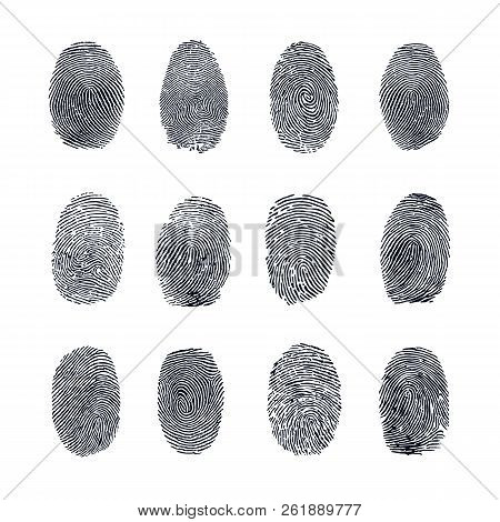 Fingerprint Vector Set. Abstract Fingerprint Vector Illustration