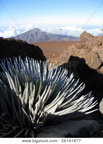 silversword plant and view into Haleakala volcano crater