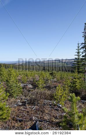 New-growth forest lands reclaiming previously logged meadow; Chilcotin, BC, Canada