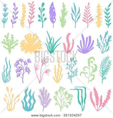 Aquarium Seaweed Silhouette. Underwater Planting Plant And Seaweeds For Aquariums Decor. Sea Plants