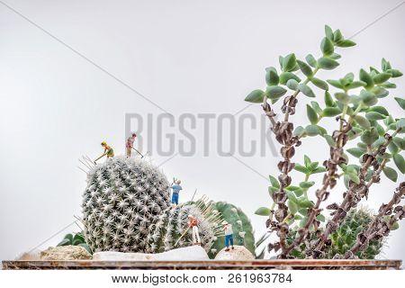 Miniature Gardeners Working At A Cactus Garden.