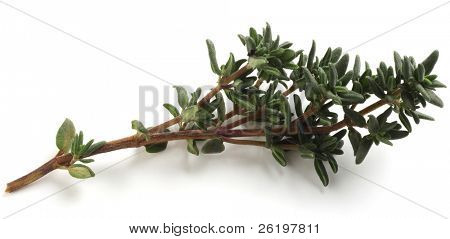 A sprig of fresh thyme, Thymus vulgaris,  for use in cooking.
