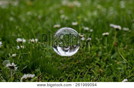 Closeup Of Glass Ball Whit Daises At The Field Reflection In It/ Soup Bubble At The Grass Field Whit