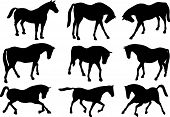 illustration with horse silhouettes collection isolated on white background poster
