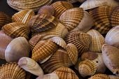 Shell collection with various shapes and colors poster