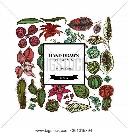 Square Floral Design With Colored Ficus, Iresine, Kalanchoe, Calathea, Guzmania, Cactus Stock Illust