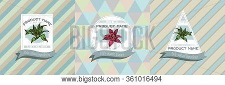 Three Colored Labels With Illustration Of Guzmania Stock Illustration