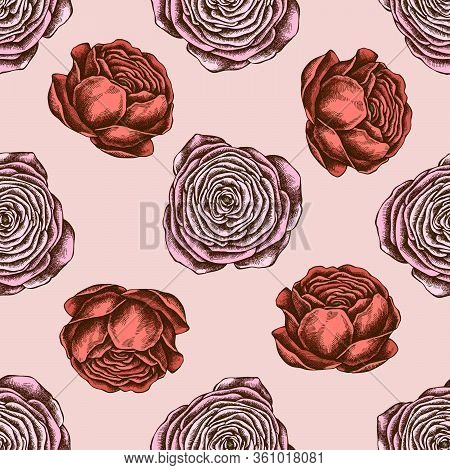 Seamless Pattern With Hand Drawn Colored Ranunculus Stock Illustration