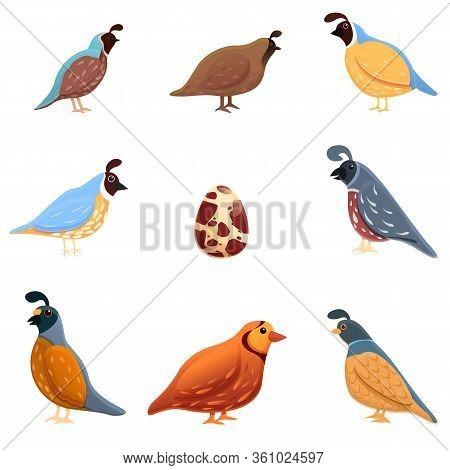 Quail Icons Set. Cartoon Set Of Quail Vector Icons For Web Design