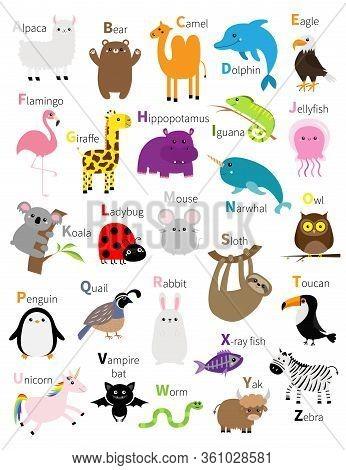 Animal Zoo Abc Alphabet. Cute Cartoon Set. Baby Children Education. Alpaca Llama Bear Camel Dolphin