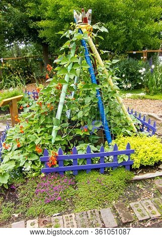 Garden Scene Scarlet Runner Beans Tied In A Triangle Shape With Wood Poles That Look Like Crayons.
