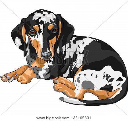 Vector Sketch Dog Dachshund Breed Lying